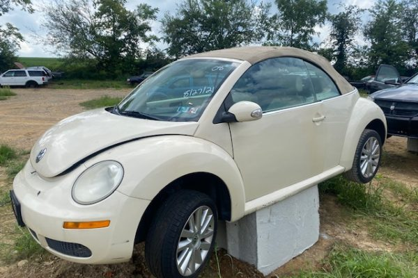 08 Beetle